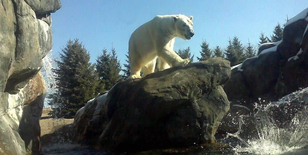 Monroe County, Seneca Park Zoo Aquatic Animal Exhibits thumbnail